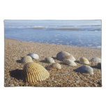 USA, Florida, Coastal Sea Shells Cloth Place Mat