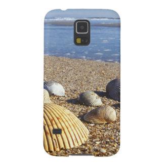 USA, Florida, Coastal Sea Shells Galaxy S5 Case