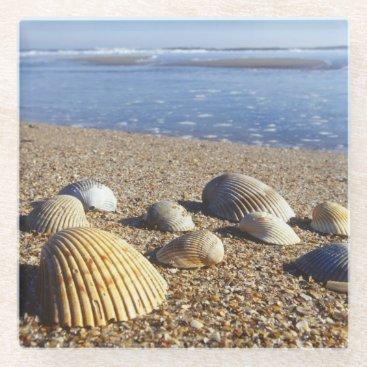 USA Themed USA, Florida, Coastal Sea Shells Glass Coaster