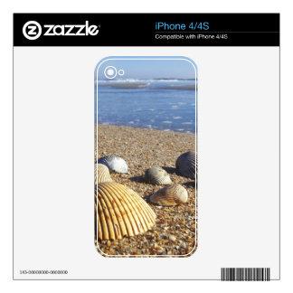 USA, Florida, Coastal Sea Shells iPhone 4S Skins