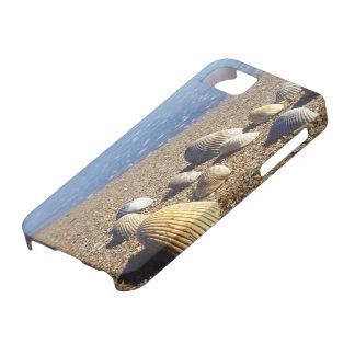 USA, Florida, Coastal Sea Shells iPhone SE/5/5s Case