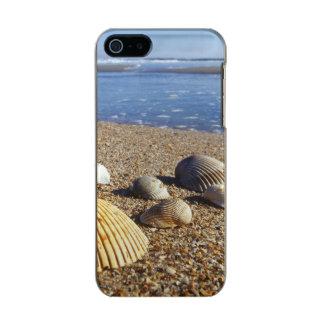 USA, Florida, Coastal Sea Shells Metallic Phone Case For iPhone SE/5/5s