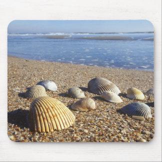 USA, Florida, Coastal Sea Shells Mouse Pad