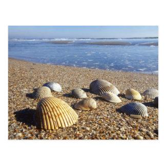USA, Florida, Coastal Sea Shells Postcard
