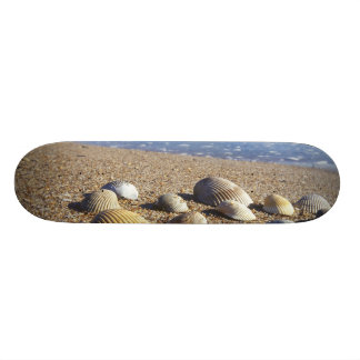 USA, Florida, Coastal Sea Shells Skateboard