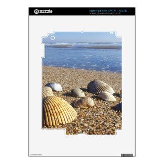 USA, Florida, Coastal Sea Shells Skin For iPad 3