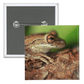 USA, Florida, Cuban Tree Frog. Button
