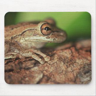 USA, Florida, Cuban Tree Frog. Mouse Pad