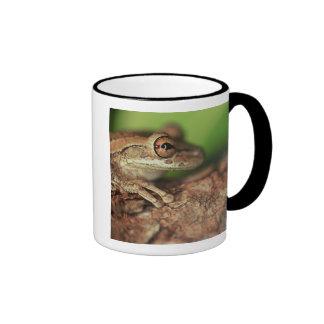 USA, Florida, Cuban Tree Frog. Mugs