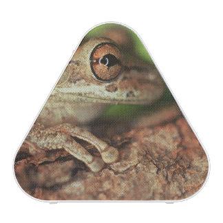 USA, Florida, Cuban Tree Frog. Speaker