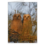 USA, Florida, De Soto. Great horned owlets sit Greeting Card
