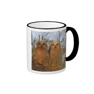 USA, Florida, De Soto. Great horned owlets sit Ringer Coffee Mug