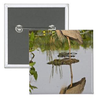 USA, Florida, Delray Beach. Great blue heron Pinback Buttons