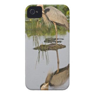USA, Florida, Delray Beach. Great blue heron iPhone 4 Case