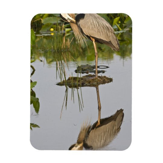 USA, Florida, Delray Beach. Great blue heron Magnet