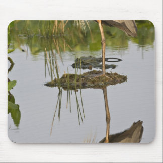 USA, Florida, Delray Beach. Great blue heron Mouse Pad