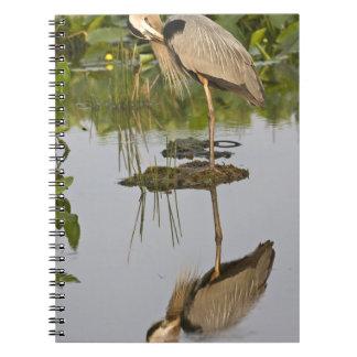 USA, Florida, Delray Beach. Great blue heron Notebook