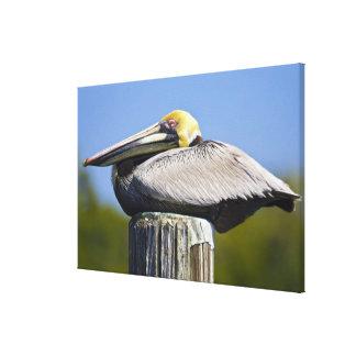 USA, Florida, Everglades City, Big Cypress Stretched Canvas Print