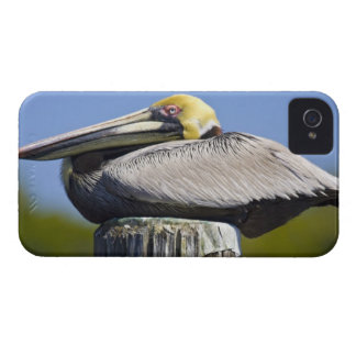 USA, Florida, Everglades City, Big Cypress Blackberry Bold Case