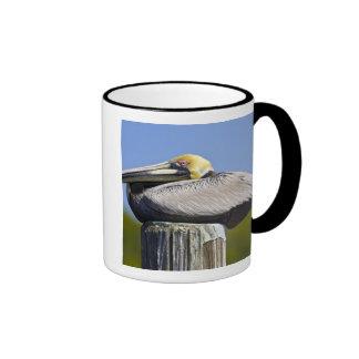 USA, Florida, Everglades City, Big Cypress Ringer Coffee Mug