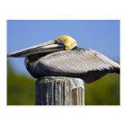 USA, Florida, Everglades City, Big Cypress Postcard