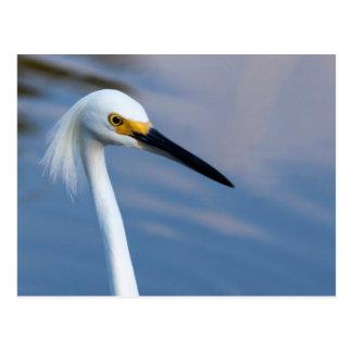 USA, Florida, Everglades National Park Postcard