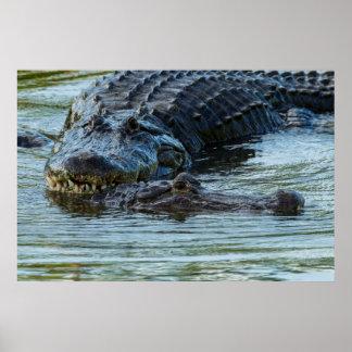 USA, Florida, Gatorland. Male Alligator Displays Print