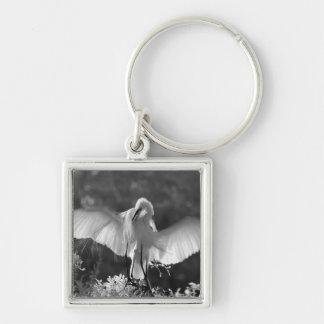 USA, Florida, Great Egret (Ardea alba) infrared 2 Key Chains