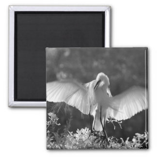 USA, Florida, Great Egret (Ardea alba) infrared 2 Magnet