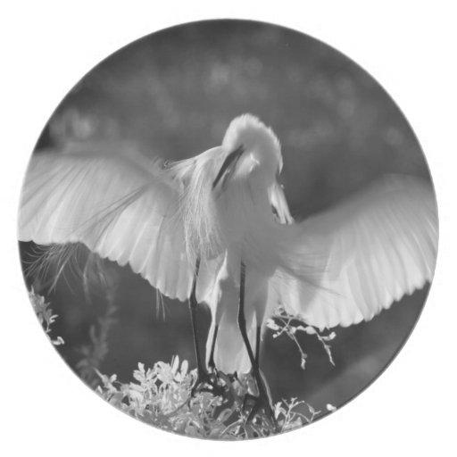 USA, Florida, Great Egret (Ardea alba) infrared 2 Plate