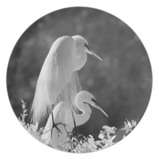 USA, Florida, Great Egret (Ardea alba) infrared Party Plate