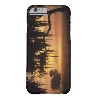 USA, Florida, Lake Kissimmee. Sunrise silhouette Barely There iPhone 6 Case