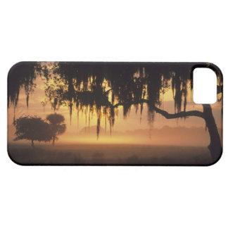 USA, Florida, Lake Kissimmee. Sunrise silhouette iPhone SE/5/5s Case