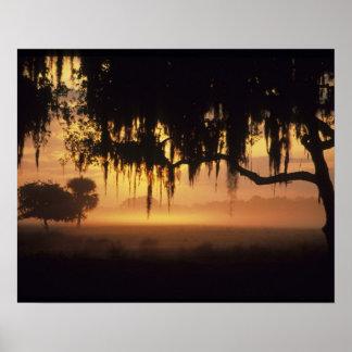 USA Florida Lake Kissimmee Sunrise silhouette Print