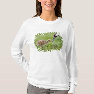 USA, Florida, Lake Kissimmee. Whooping crane T-Shirt
