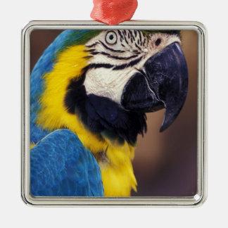 USA, Florida. Macaw Metal Ornament