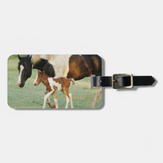 USA, Florida, Newborn Paint filly Bag Tag