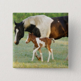 USA, Florida, Newborn Paint filly Button