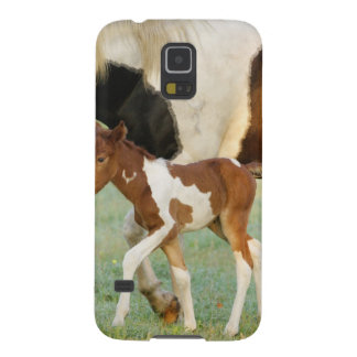 USA, Florida, Newborn Paint filly Case For Galaxy S5