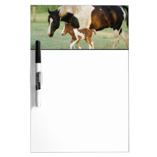 USA, Florida, Newborn Paint filly Dry-Erase Board