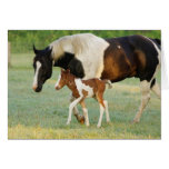 USA, Florida, Newborn Paint filly Greeting Cards
