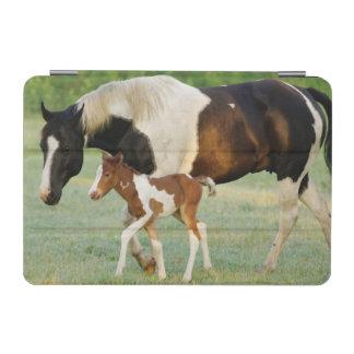 USA, Florida, Newborn Paint filly iPad Mini Cover