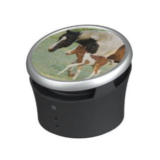 USA, Florida, Newborn Paint filly Bluetooth Speaker