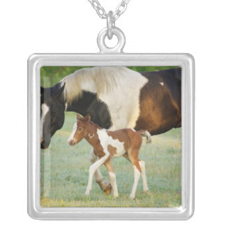 USA, Florida, Newborn Paint filly Silver Plated Necklace