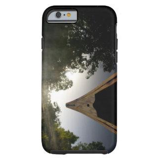 USA, Florida, Ocala National Forest, Alexander Tough iPhone 6 Case