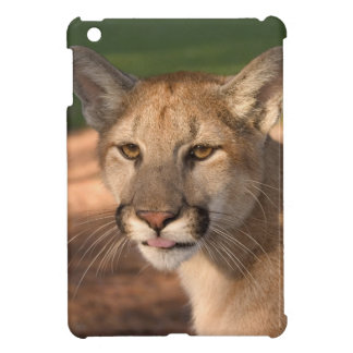 USA, Florida panther (Felis concolor) is also iPad Mini Cover