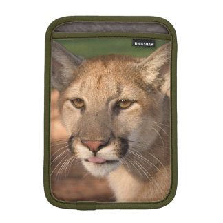 USA, Florida panther (Felis concolor) is also iPad Mini Sleeve