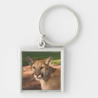 USA, Florida panther (Felis concolor) is also Key Chain