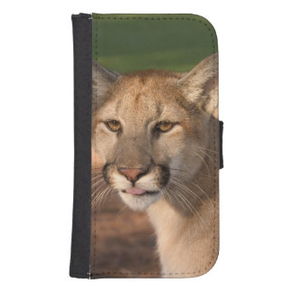 USA, Florida panther (Felis concolor) is also Phone Wallet