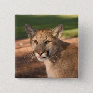 USA, Florida panther (Felis concolor) is also Pinback Button